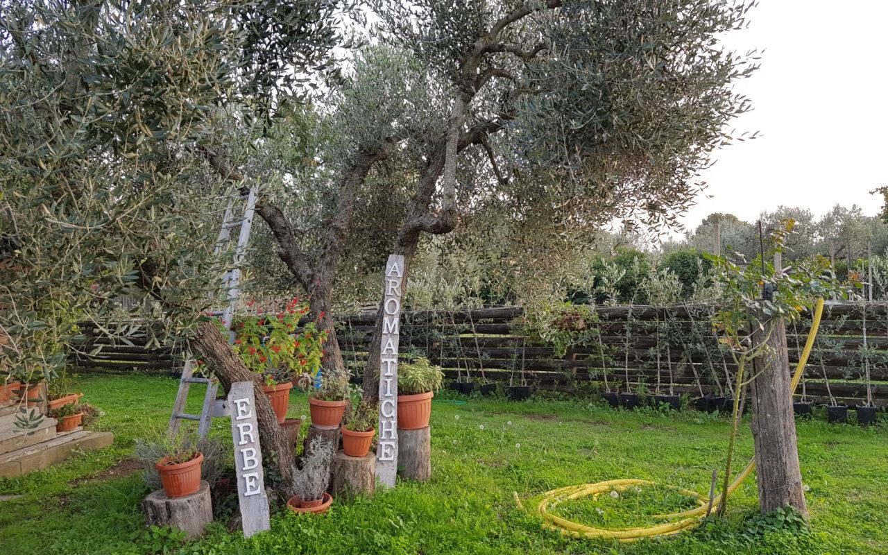 Le piante aromatiche della FATTORIA BARBINI